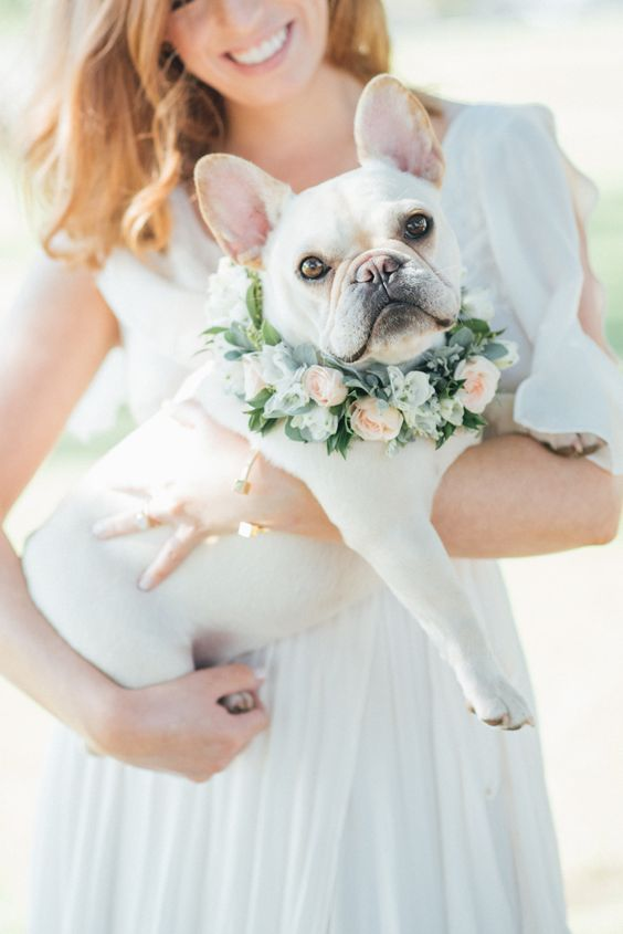 7 consejos para incluir a tu perro en tu boda